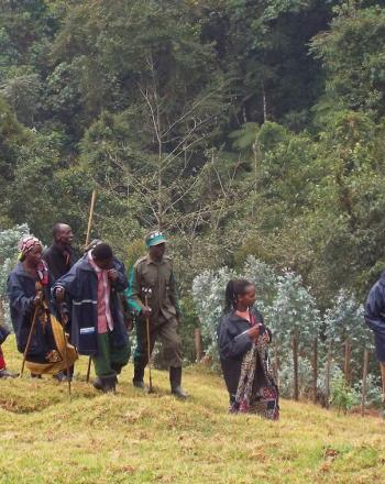 Group of people walking on hill, forest in background.