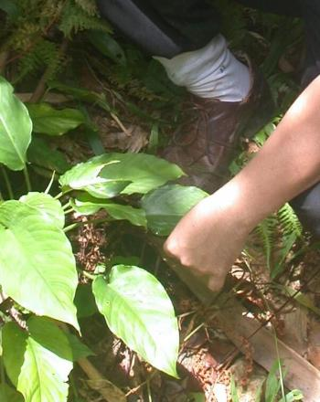 Close-up of person tending to green plant.