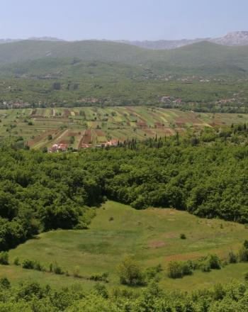 Green valley, agriculture in background.