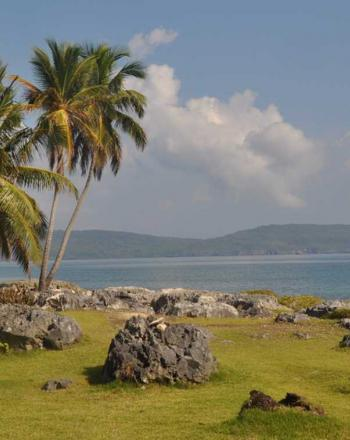 Palm trees on grassy shore, budding up against sea.