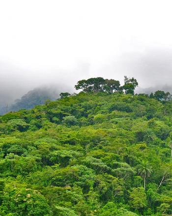 Green forest, misty clouds.