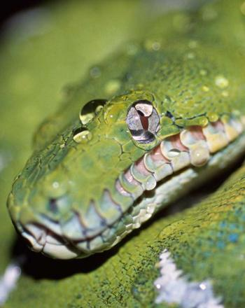Close-up of curled, green snake with white markings.