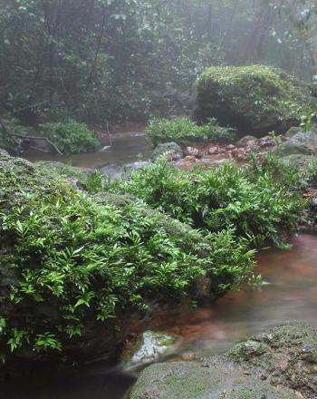 Misty stream with lush foliage.