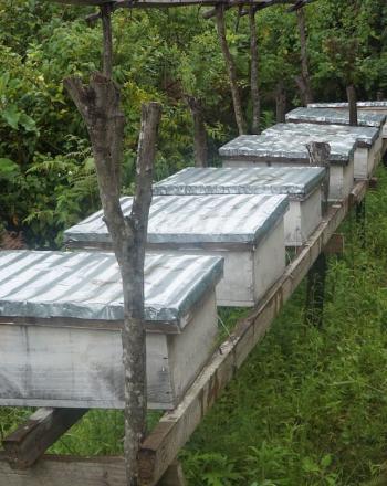 Beekeeping boxes