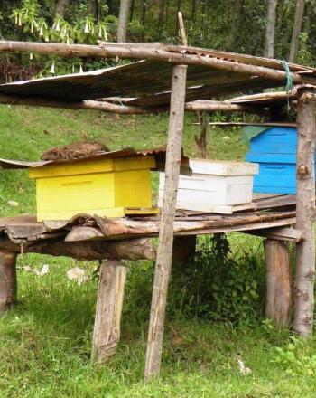 Beekeeping boxes on wooden platform.