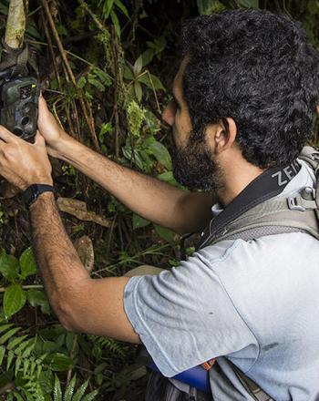 Man putting camera trap on tree.