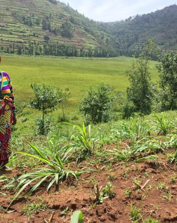 A woman stands in a planted field