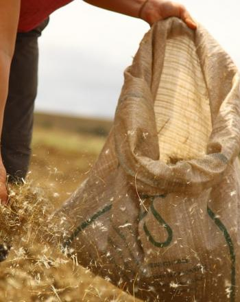 Woman distributing seed from bag.