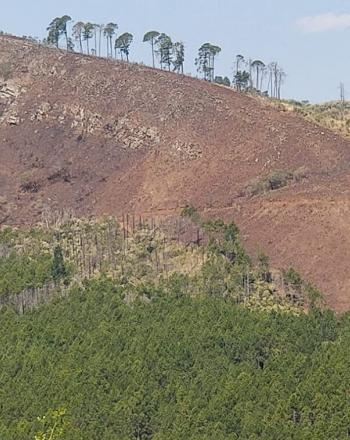 Mountain, green at the bottom, red toward the top, with a few tall trees on the ridge.