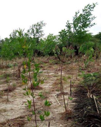 Degraded farmland