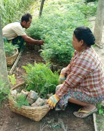 Woman and man plant tree seedlings in nursery.