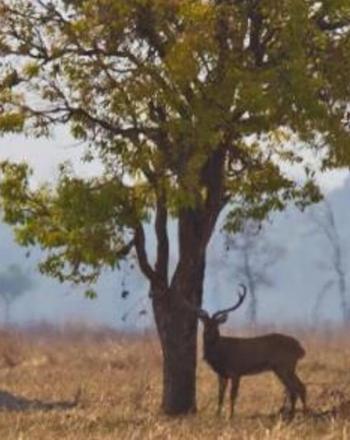 Three deer standing near tree.