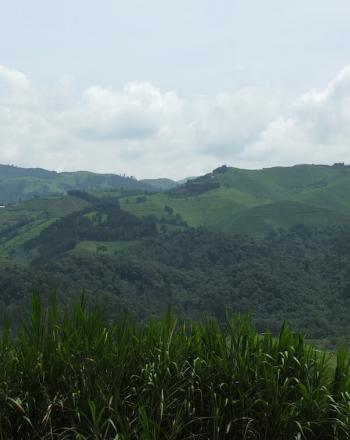 Vista of green, undulating hills.