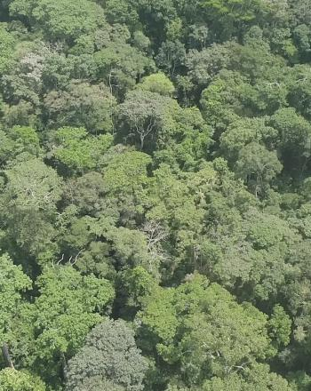 Aerial view of forest canopy.