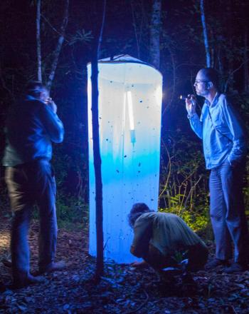 Night, a few people looking at a light with net, which has attracted insects.
