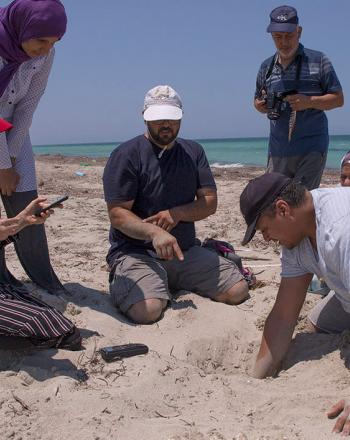Five people on beach, one is digging with his hand.