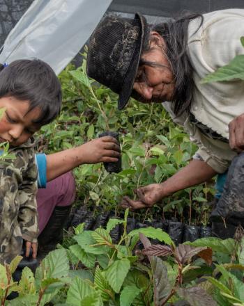 Women and small boy in community plant nursery.
