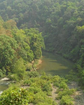 High-up view of lush forest and river.