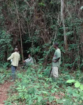 Four people standing in forest, talking.