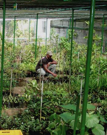 Two men tending to plants on ground in nursery.