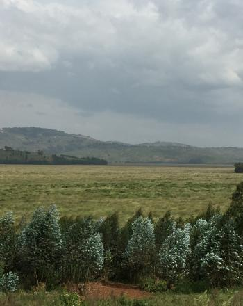 Rugezi marsh under a cloudy sky