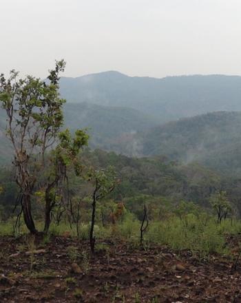 Forest vista