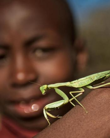 Boy holding up praying mantis on the back of his hand.