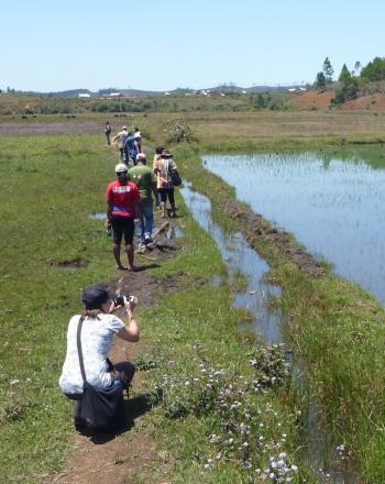 People walking along wetlands, one woman taking a photograph.