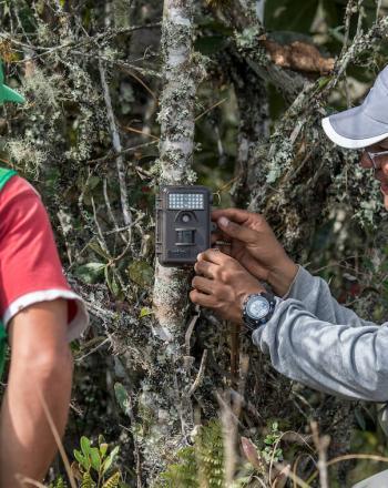 Two men check camera trap on tree.