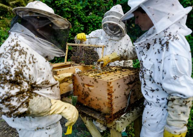 Three beekeepers in white suits handling hive.
