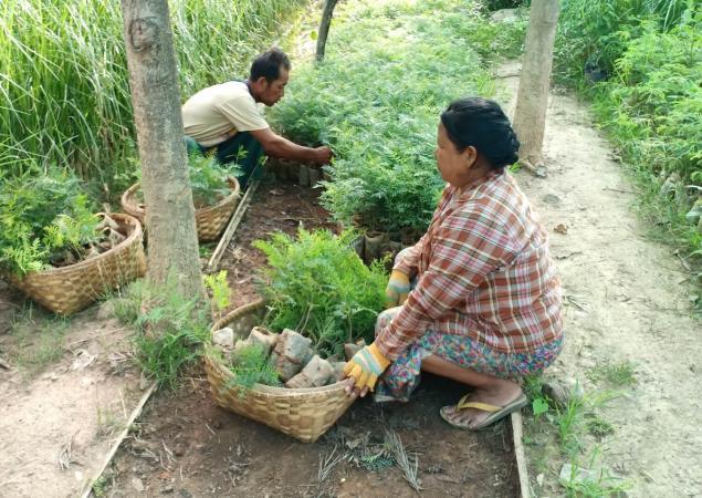 Man and woman planting tree seedlings.