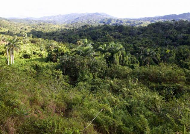 Lush green forest in the Dominican Republic, with mountains in the background.