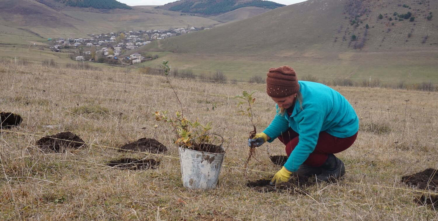 Woman in warm clothing planting trees, mountain and village in the distance.