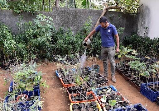 Man tending to plant nursery.
