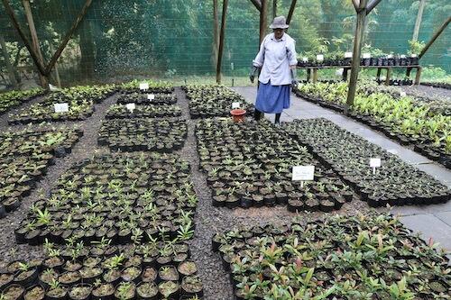 Woman stands in tree nursery.