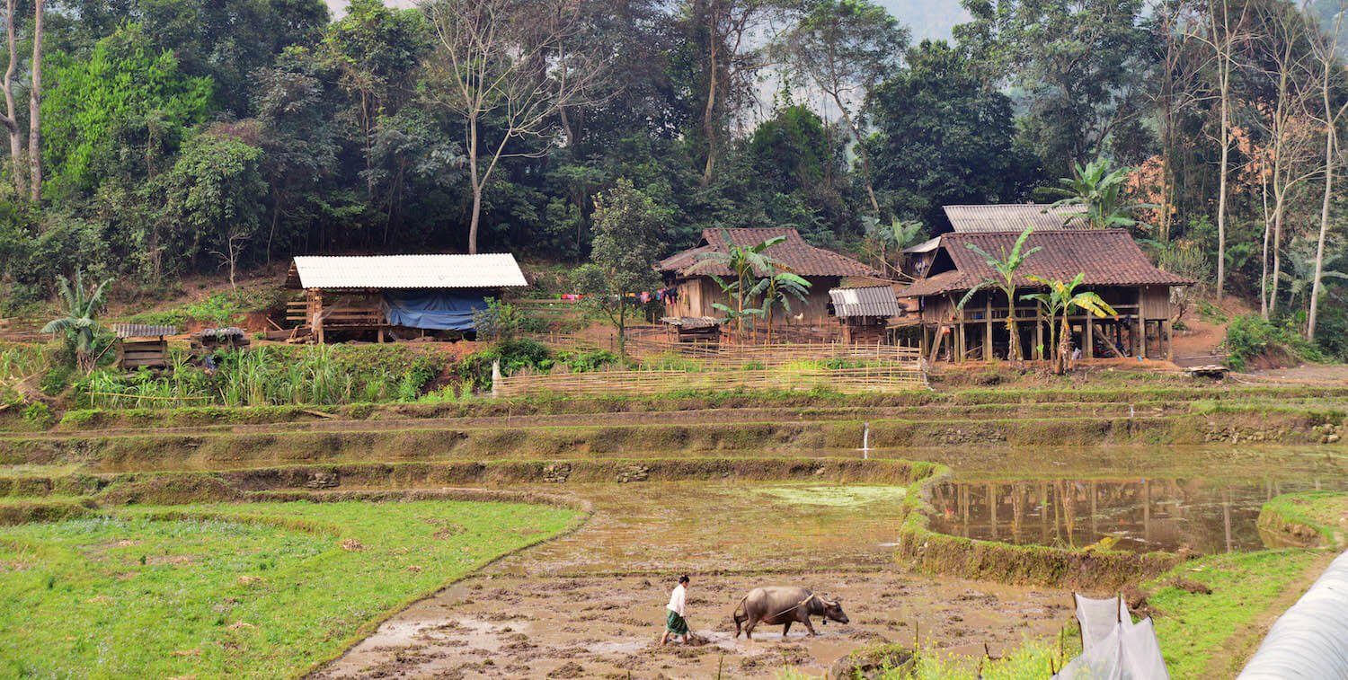 Luscious landscape with several buildings in background and woman and cow in foreground.