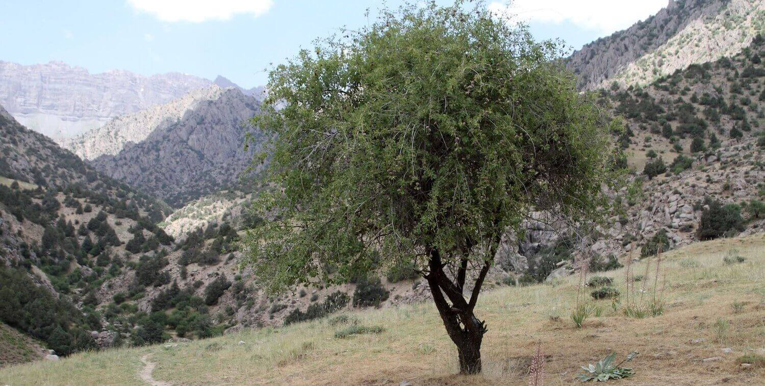 Tree in foreground, mountainous terrain in background.