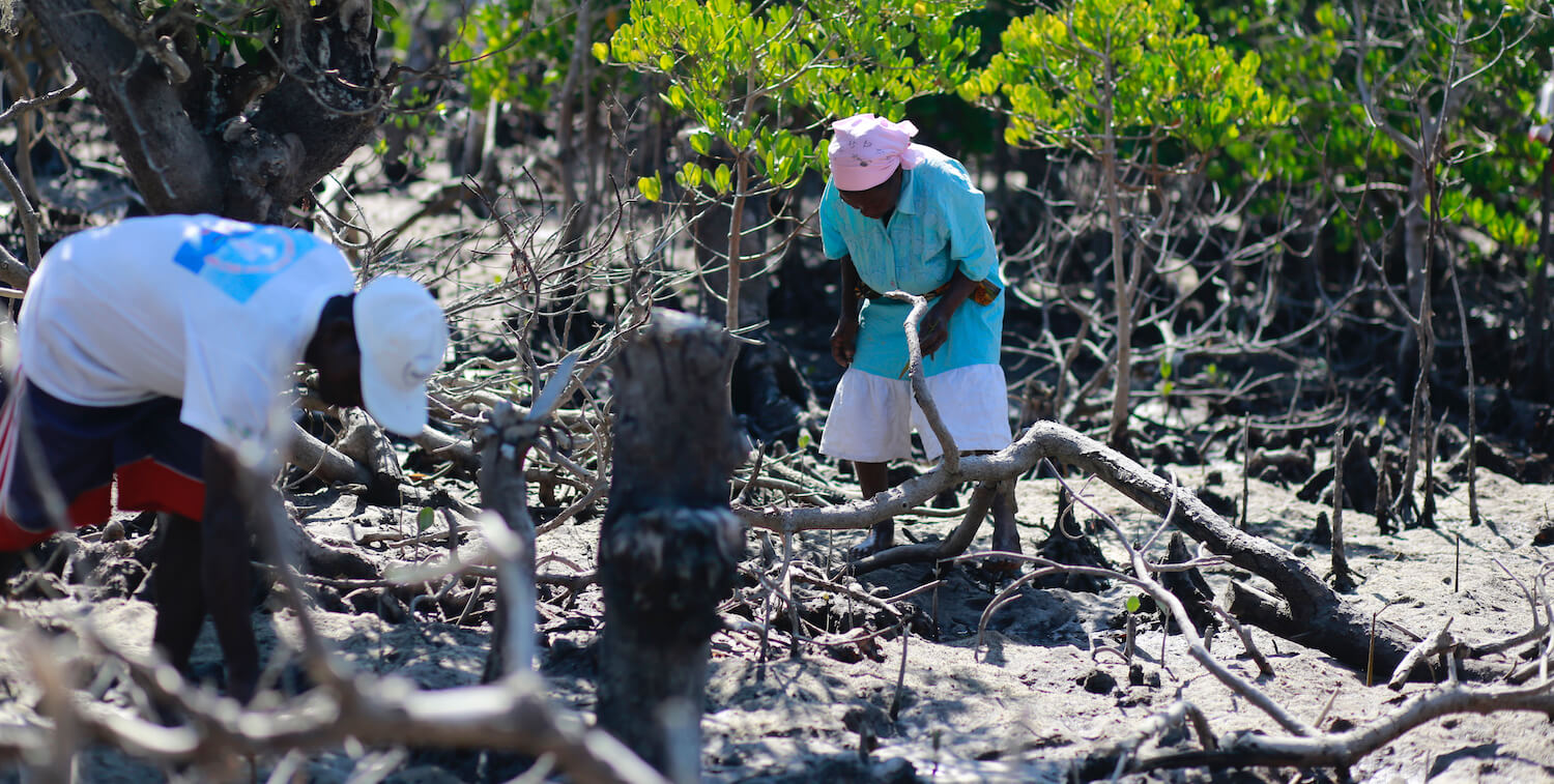 Man and woman working in mangrove.