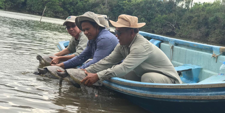 Three men in skiff releasing turtles into the water.
