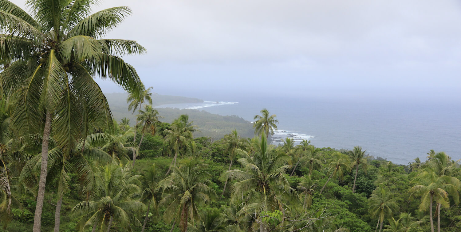 Palm tree forest in foreground, ocean in background.